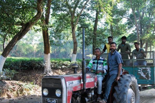 tea-garden-workers3