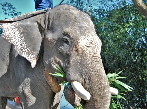 camp maghi elefant