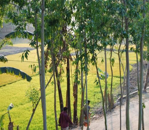 Gaibandha Blick aus Zimmer