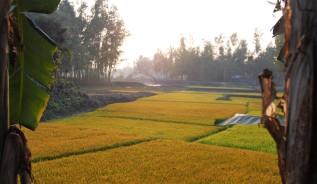 Reisfelder im Abendlicht2
