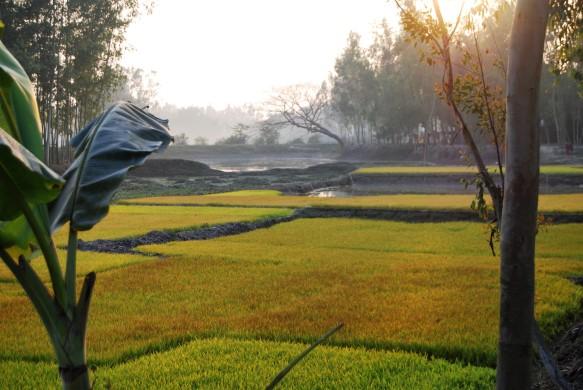 Reisfelder im Abendlicht3