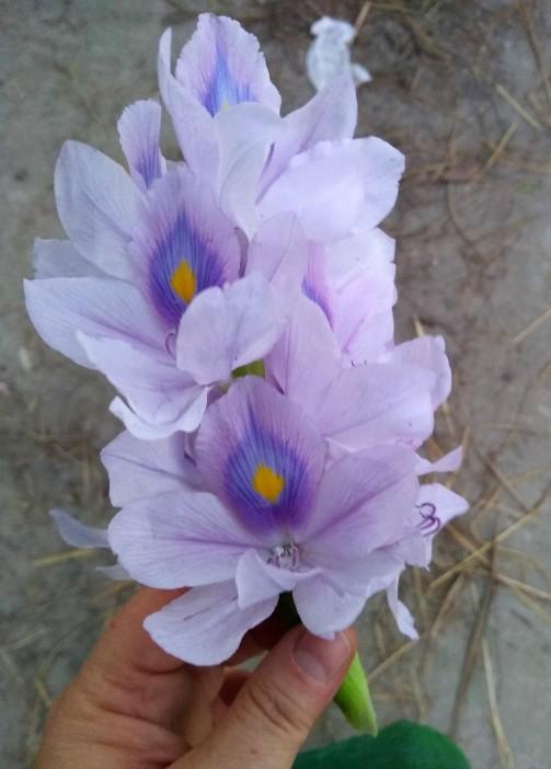 BD 2019-11-15 (1) (14) Blume bearbeitet.jpg
